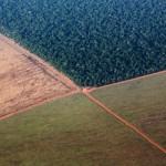 O que é um bioma? A diversidade de biomas do Brasil – Campanha da Fraternidade